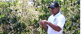 Die besten Kaffee der Welt kommt aus Panama und ist in Panama produziert: Erfahren Sie alles darüber in einem Kaffee-Tour!
